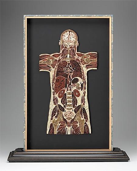 Lisa Nilsson Anatomy