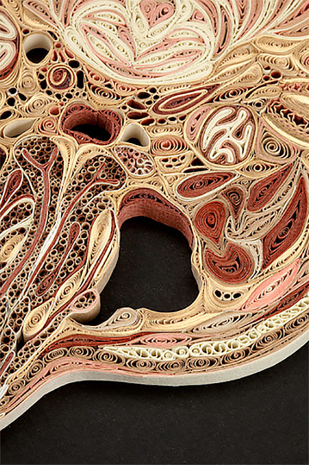 Anatomical Paper