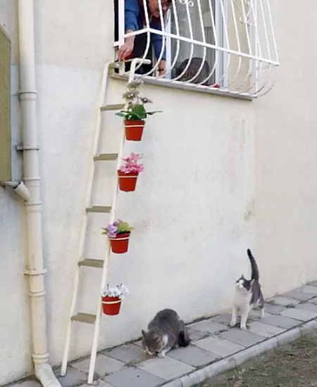 House with Cat Ladder