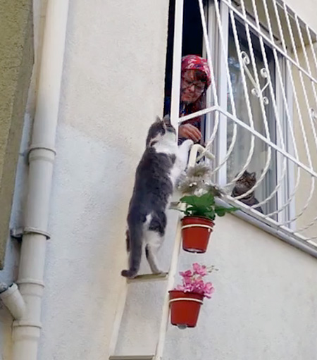 Ladder for Cats