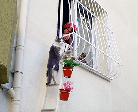 Ladder for Cat