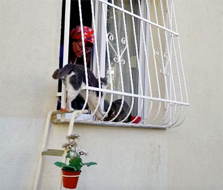 Sebnem Ilhan Cat Ladder