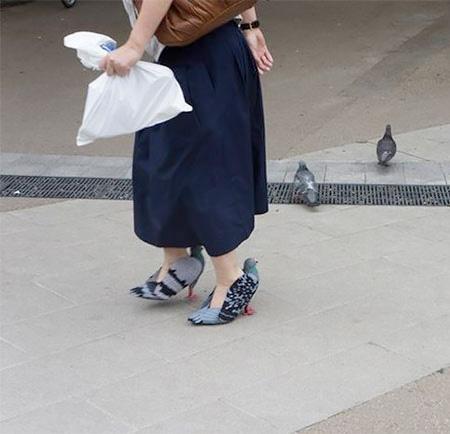 Pigeon Shoe