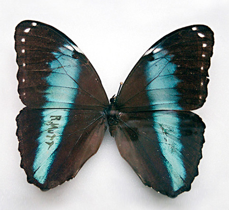 Sarah Garzoni Butterfly