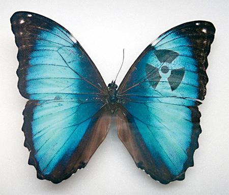 Sarah Garzoni Butterflies