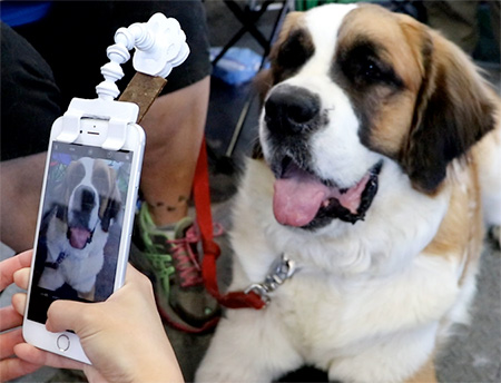 Pet Treat Phone Attachment