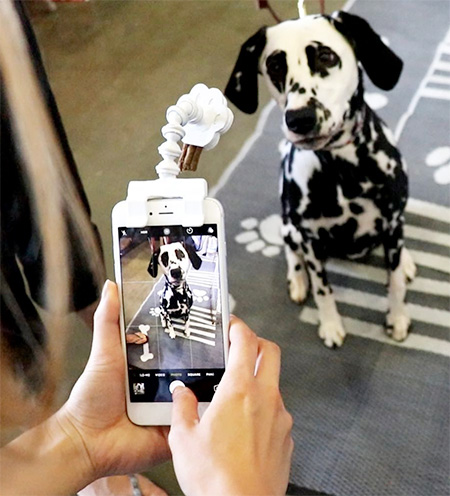 dog selfie phone attachment. Black Bedroom Furniture Sets. Home Design Ideas