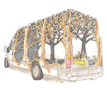Dan Rawlings Forest