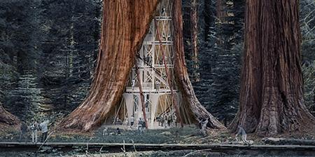 Giant Tree Skyscraper