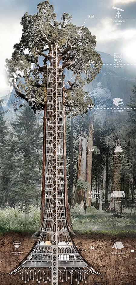 Sequoia Tree Skyscraper