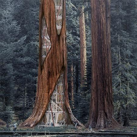 Sequoia Skyscraper
