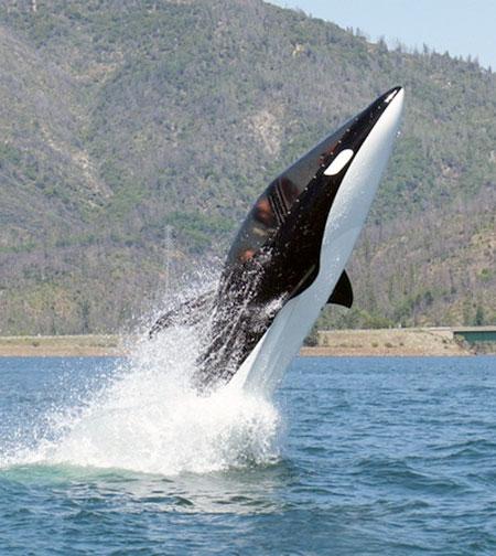 Killer Whale Personal Submarine