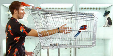 Shopping Cart Birdcage