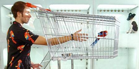 Shopping Cart Birdcage