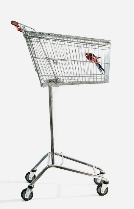 Shopping Cart Bird Cage