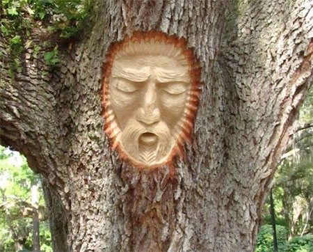 Keith Jennings Tree Faces