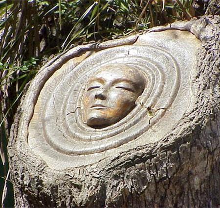 Keith Jennings Tree