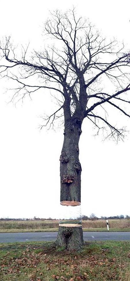 Camouflaged Tree