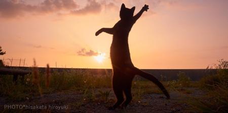 Cats Doing Martial Arts
