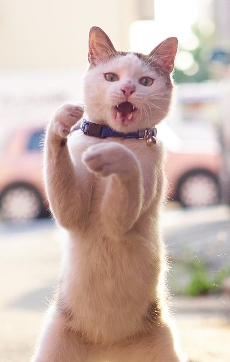 Kung Fu Cats