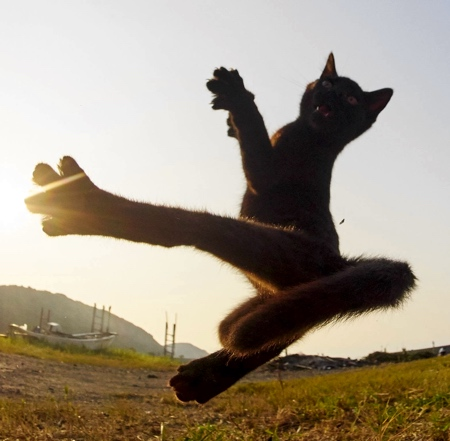 KungFu Cats