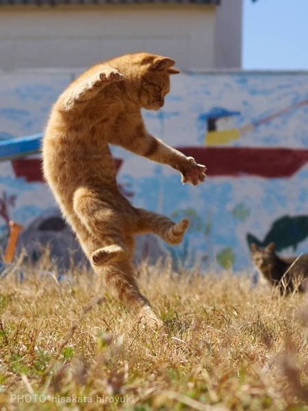 Hisakata Hiroyuki Cats