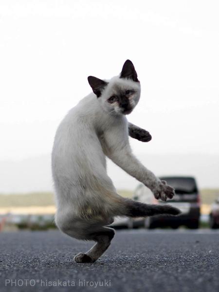 Martial Arts Cats