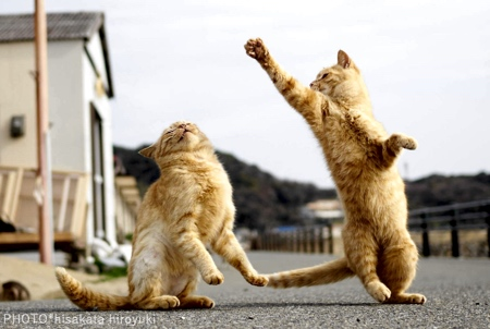 Hisakata Hiroyuki Martial Arts Cats