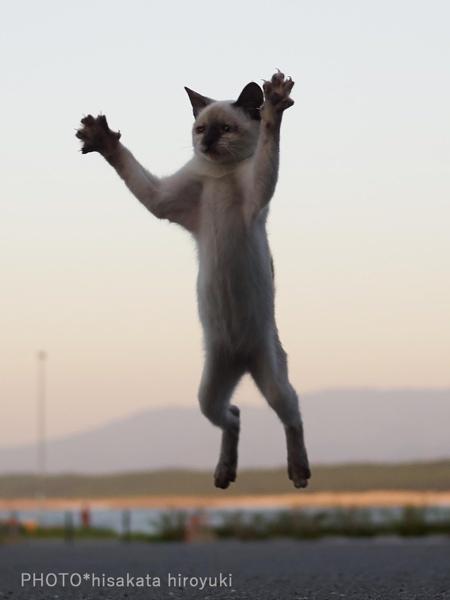 Cat Martial Arts
