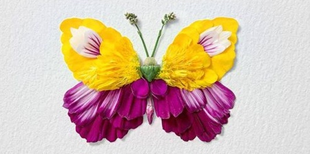 Flower Butterflies