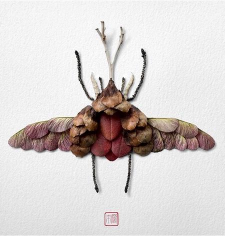 Raku Inoue Natura Insects
