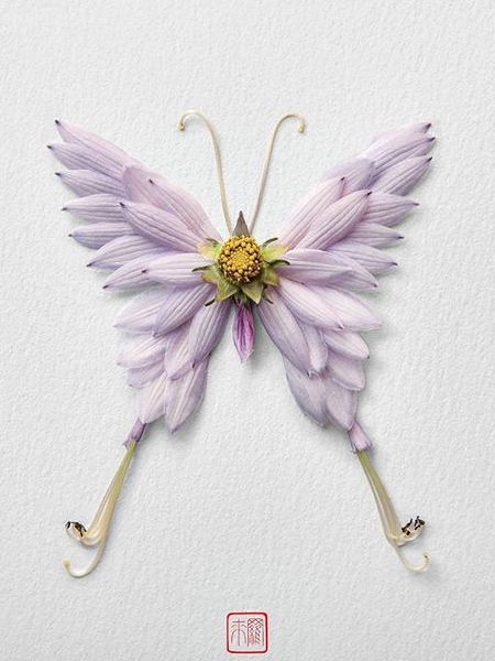 Raku Inoue Flower Butterflies