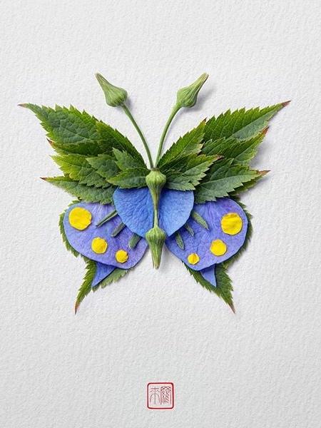 Raku Inoue Butterflies