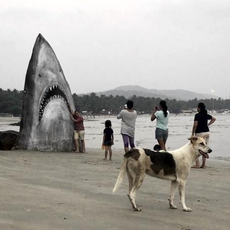 White Shark Rock