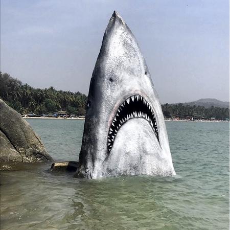 Jimmy Swift Giant Shark Rock