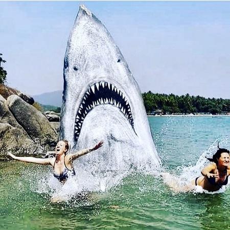 Jimmy Swift White Shark Rock