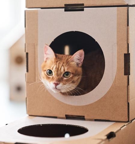 Prefab Cat House