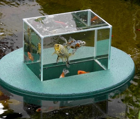 Floating Fish Tank
