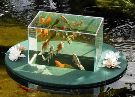 Backyard Aquarium