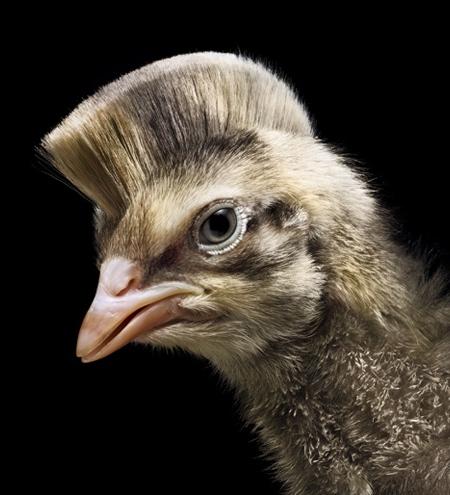 Animal Haircut