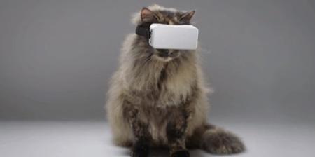 Cat VR