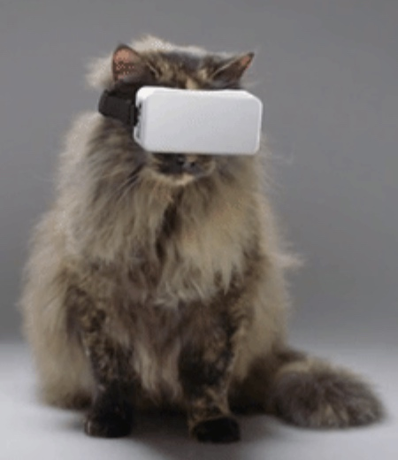 VR for Cats