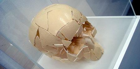 Egg Shell Human Skull