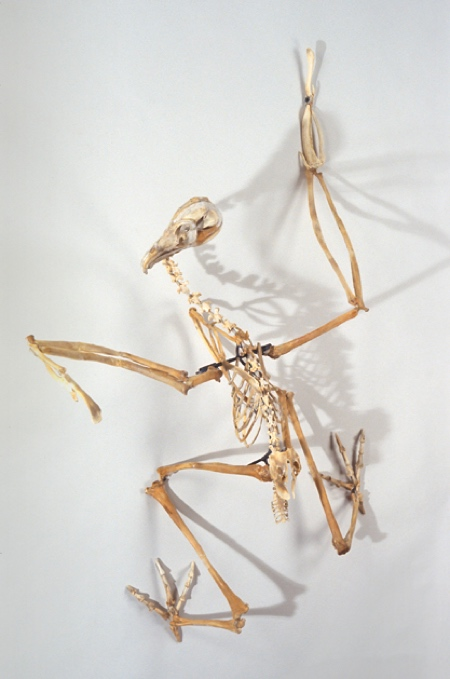 Extinct Birds Sculptures