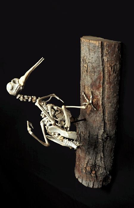 Extinct Bird Skeletons