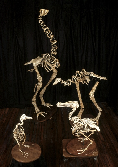 Christy Rupp Extinct Birds