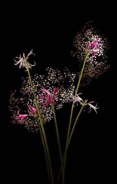 Flower Firework