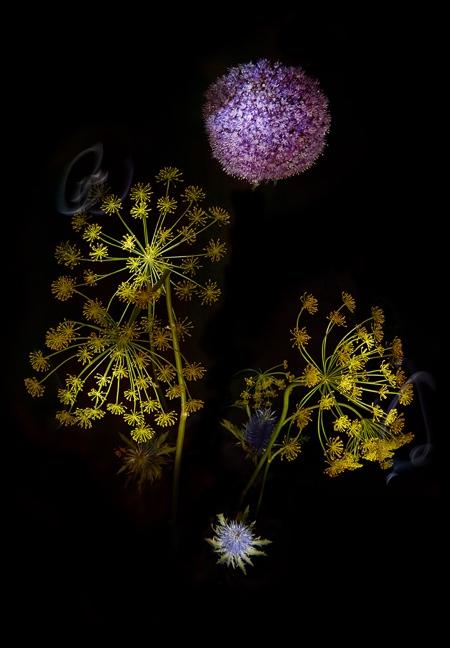 Sarah Illenberger Flowerworks