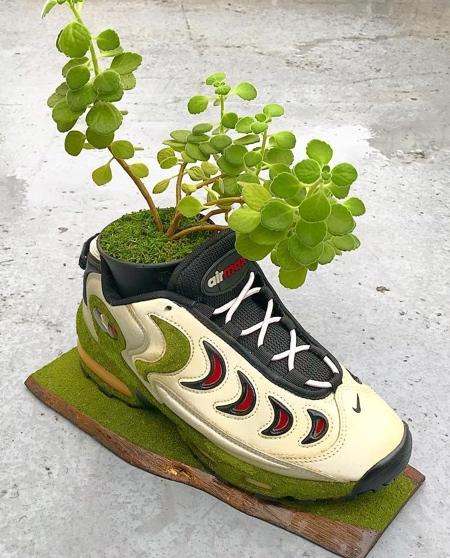 Nike Shoes Tree