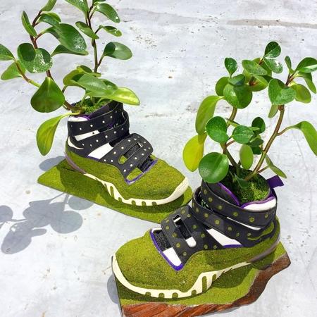 Kosuke Sugimoto Nike Shoes Trees